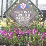 Orchideen Garten in Singapurg