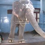 Der Tempelelefant