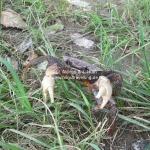 Eine Krabbe irrte am Wegesrand umher