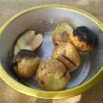 Brotdrucht aus dem Umu
